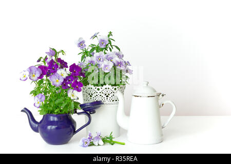 Purple, blue and lilac pansy flowers in a beautiful pot with two vintage enamel jugs or pots on white background, copy or text space - Stock Image