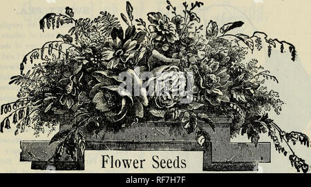 . Season of 1902 : seeds, bulbs. Nursery stock Connecticut Middletown Catalogs; Vegetables Seeds Catalogs; Flowers Seeds Catalogs; Gardening Equipment and supplies Catalogs. FRED. P. BURR & CO.'S PRICE LIST. 21. —AND— SUMMER FLOWERING BULBS. LIBERAL PREMIUMS. Of all seeds in packets, the purchaser may select iwenty-five cents' worth extra, for each one dollar sent us. Thus, anyone sending us #1.00, can select seeds, in packets, amounting to £1.25 ; for #2.00, to the value of £2.50, and so on. This discount applies only to seeds in packets. Postage stamps accepted the same as cash. General  - Stock Image