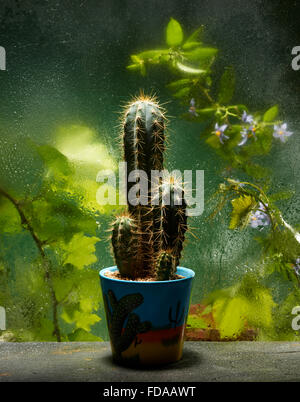 A cactus in a pot on the greenhouse bench - Stock Image