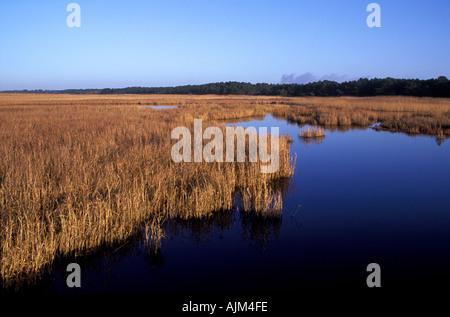Wetland marshes in autumn western Zealand Denmark - Stock Image