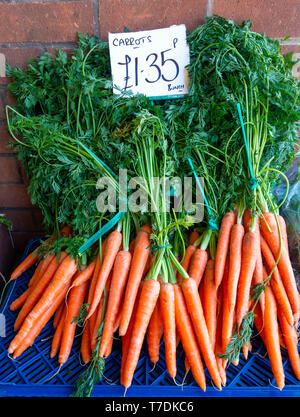 Fresh locally grown carrots in a greengrocery in Northallerton North Yorkshire England priced £1.35p per pound - Stock Image