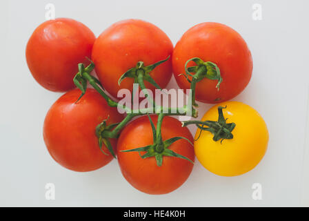Red and yellow tomatoes on a white background - Stock Image
