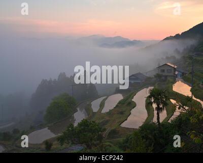 Foggy morning at Takahara in Kii Mountain Range, along Kumano Kodo Pilgrimage  Route, Kii Peninsula, Wakayama Prefecture, - Stock Image