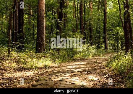 Path in the forest - Stock Image