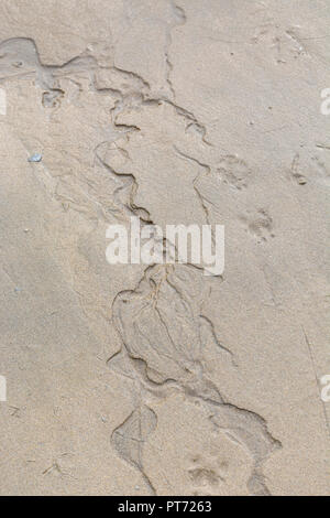 Small rivulet of fresh water rippling through wet beach sand. Newquay, Cornwall. - Stock Image
