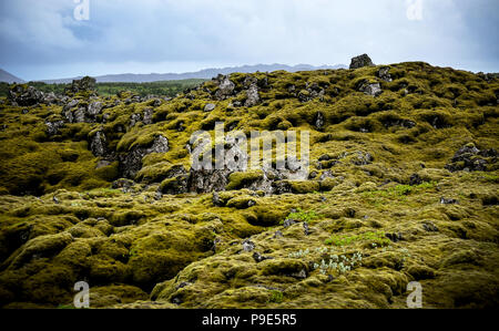 Icelandic lava field covered in moss - Stock Image