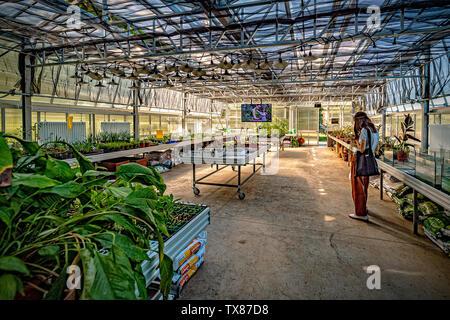 Italy Piedmont Turin Valentino botanical garden - Greenhouse - Stock Image
