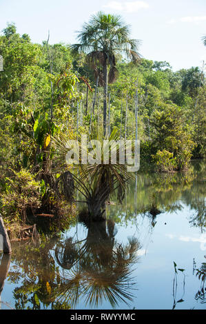Mato Grosso State, Brazil. Along the MT322/BR80 road. - Stock Image