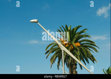 palm tree and modern design street lamp - Stock Image