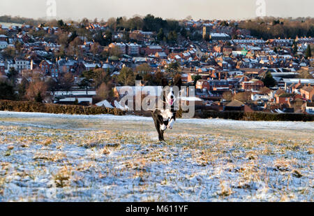 Ashbourne, Derbyshire, UK. 27th February, 2018. UK Weather: Boarder Collie dog having fun running in the Beast From - Stock Image