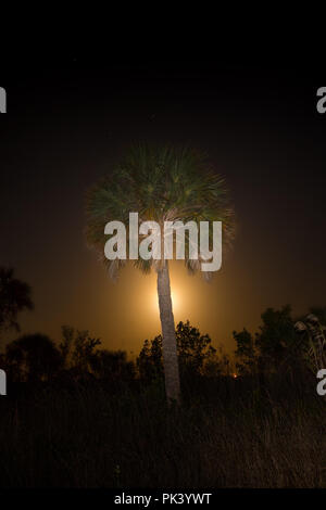 A swamp moonset at Big Cypress National Preserve in South Florida. - Stock Image