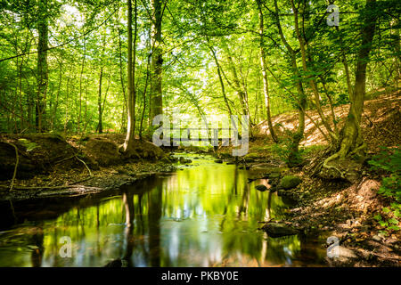 Green forest with a river running through under a bridge in the summer - Stock Image