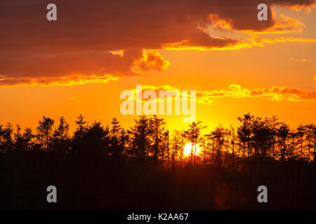 Sunset over a planation in Cley on the North Norfolk coast, UK. - Stock Image