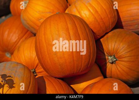 Closeup of pumpkin stacks - Stock Image