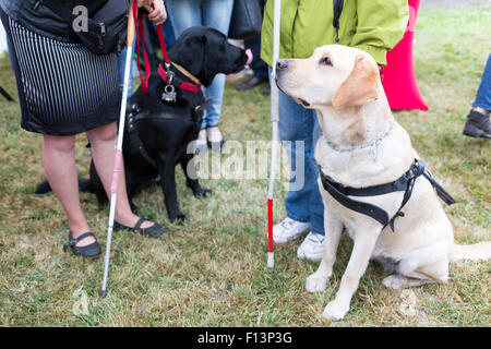 Blind people and guide dogs during the last training for the animals. The dogs are undergoing various trainings - Stock Image