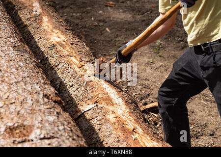 Man is removing the bark of a spruce - Stock Image