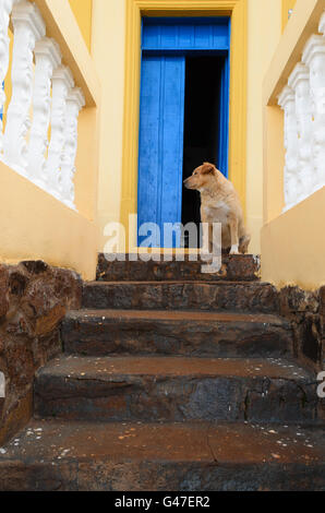 a dog on top of a stone staircase - Stock Image