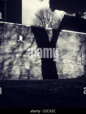 Shadow of a tree on a wall - Stock Image