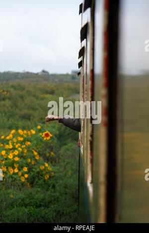 A Childs hand plays with a flower out of a train window. - Stock Image