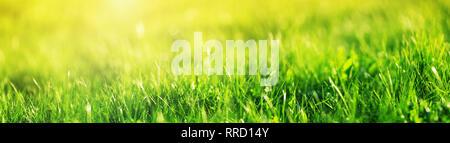 Fresh green grass background - Stock Image
