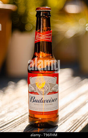 Bottle of Budweiser Beer, an American lager first introduced in 1876 - Stock Image