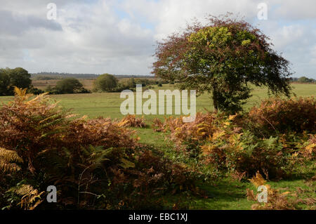The New Forest, UK - Stock Image