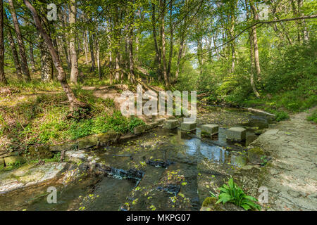 A woodland footpath in early spring with a flight of steps down a bank leading to stepping stones across a stream, in dappled shade - Stock Image