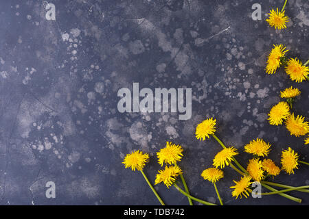 Beautiful, yellow dandelions on a black background, top view, close-up. An interesting, unusual and creative look. Flat lay. - Stock Image