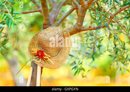 Womens hat on the tree in the olives garden, autumn harvest season, carefree day in countryside, relaxation after - Stock Image