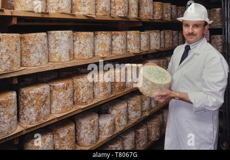 Maturing and ripening blue Stilton cheese stored at Long Clawson Dairy, Long Clawson, Melton Mowbray, Leicestershire, England, UK - Stock Image