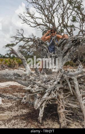 Driftwood Beach Jekyll Island Brunswick Georgia USA - Stock Image
