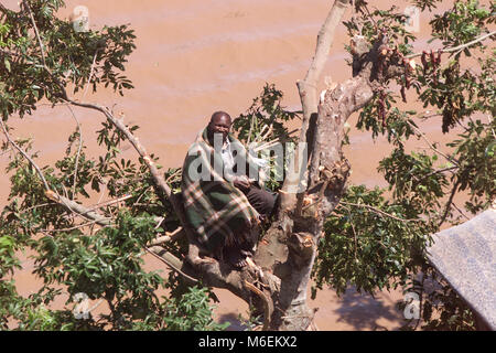 Floods in Mozambique, March 2000; A South African Air Force helicopter resucues people who have climbed a tree to - Stock Image