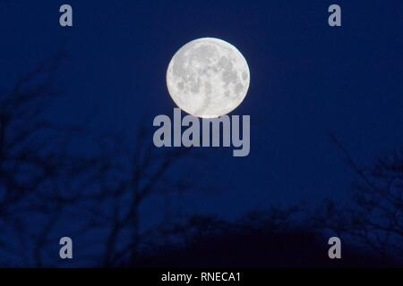 Hailsham, UK. 19th Feb 2019. Todays full supermoon (99.7%) also known as a snow moon begins to set over the town of Hailsham in East Sussex. Credit: Ed Brown/Alamy Live News - Stock Image