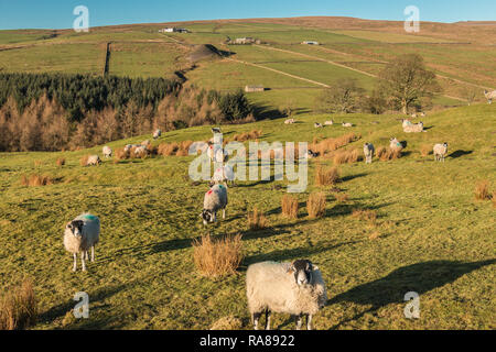 North Pennines AONB landscape, view looking west over the Hudeshope valley in strong winter sunshine and a clear blue sky - Stock Image