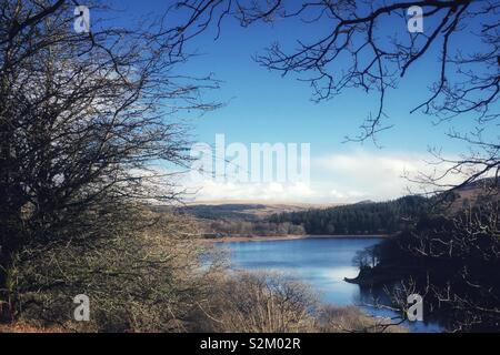 Reservoir view through tree branches. - Stock Image