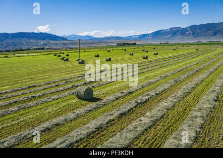 View of cut green hay and hay bales in a farm field. - Stock Image