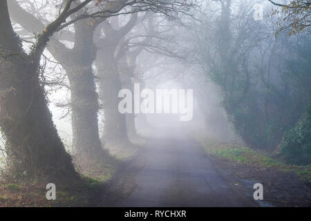 looking down a tree lined English country lane in the mist, the foreground is clear but gets more foggier in the distance. - Stock Image
