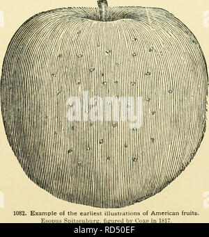 . Cyclopedia of American horticulture, comprising suggestions for cultivation of horticultural plants, descriptions of the species of fruits, vegetables, flowers and ornamental plants sold in the United States and Canada, together with geographical and biographical sketches, and a synopsis of the vegetable kingdom. Gardening -- Dictionaries; Plants -- North America encyclopedias. HORTICULTURE ANNUAL AND BIENNIAL FLOWERS —Oorttmufiti. HORTICULTURE 761 Daisy, Dwarf Basil, Egg Plant, Eupatorium, Blue, Euphorbia Lathyris, Fading Beauty, or Morning Bride (Scabiosa), Fir {Finus balsamea). Foxglove,  - Stock Image
