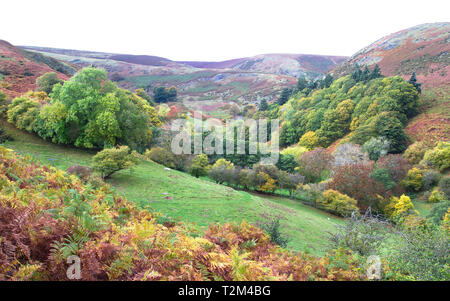 Fall colors dominate the landscape in rural Shropshire, England. - Stock Image