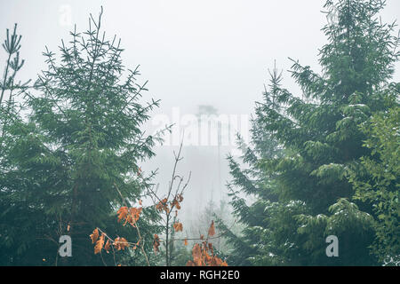Forest with pine trees in a misty landscape in the fall with fog  covering the trees - Stock Image