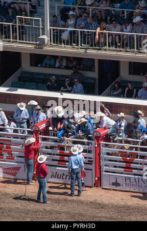 Saddle Bronc competitor gets ready to leave the chute at the Calgary Stampede Rodeo, Stampede Grounds, Calgary, Alberta, Canada - Stock Image