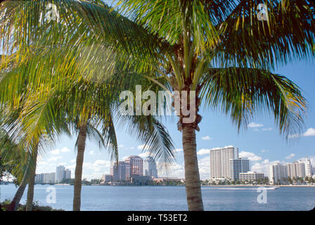 West Palm Beach Florida Lake Worth view through coconut palms from Palm Beach - Stock Image