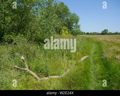 The Ridgeway, Ancient Road, Nr, Little Stoke, Passing Threw Oxfordshire Countryside, Oxfordshire, England, UK, GB. - Stock Image