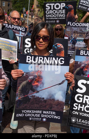 Hebden Bridge, UK. 11th August 2018. Rally to ban grouse shooting held in Hebden Bridge's St George's Square. The nearby uplands are let out by Yorkshire Water to grouse shooters who are accused of decimating the wildlife for sport by trap and gun, burning large sections of heather to increase game bird numbers and decimating blanket bog and contributing to flooding in the valley. The protesters urged Yorkshire Water to stop leasing land above the town for grouse shooting. Credit: Stephen Bell/Alamy Live News - Stock Image