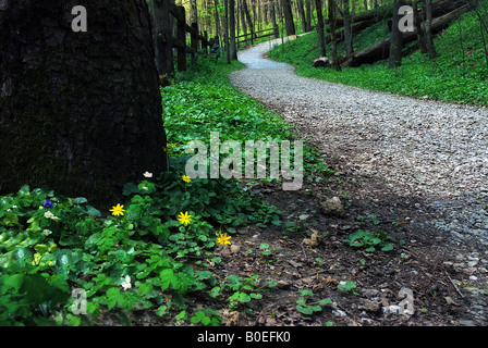 Trail at a nature center. Spring flowers in bloom. - Stock Image