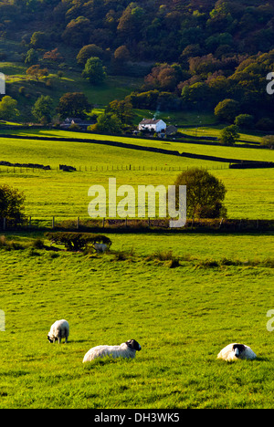 A sheep farm in cumbria set in a a wide valley with farm building nestling in against the valley side on a sunny autumn day - Stock Image
