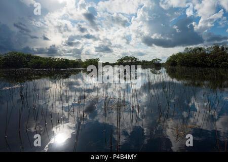 Wetlands river of grass , Everglades National Park, Miami, Florida, USA - Stock Image
