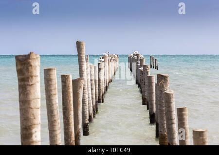 Sea Gulls and Pelicans Resting on Remains of Abandoned Wooden Pier on Caye Caulker Caribbean Island in Belize Central America - Stock Image