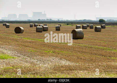 field with bales of hay - Stock Image