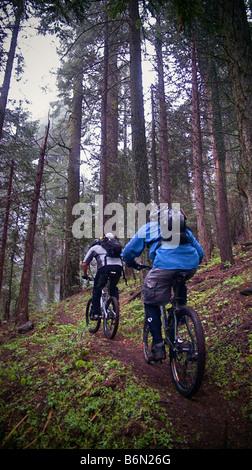 mountain bikers on Bear Creek Trail, Camp Nelson, Sequoia, California - Stock Image